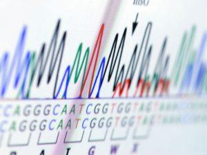 DNA seqeunce on a computer screen.